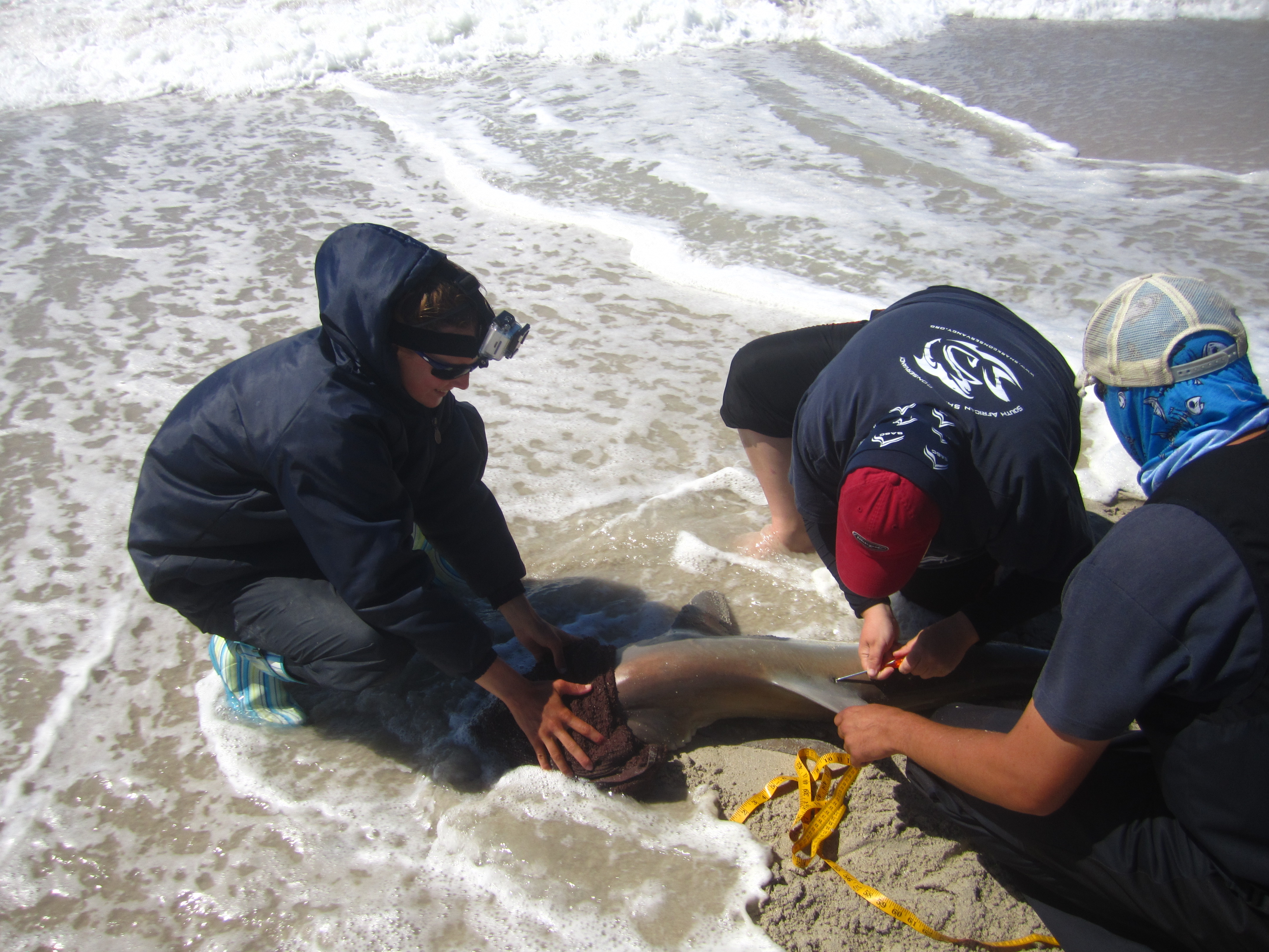 The RecFishSA team works quickly in the shallow water to minimize stress