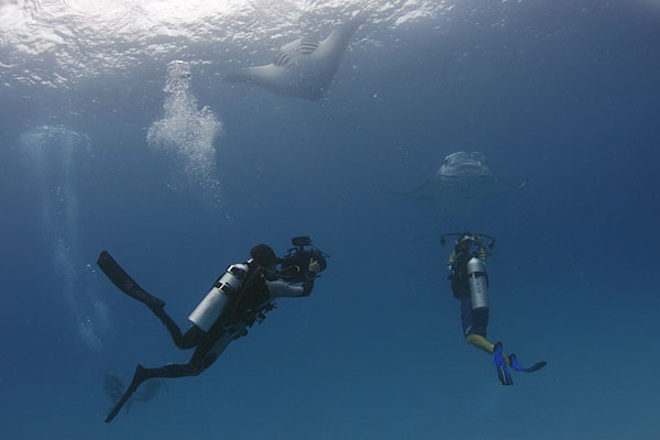 They were not many feeding mantas around today, but I managed to capture a few