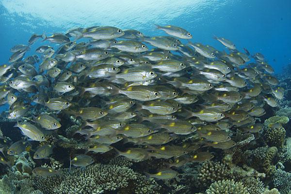 Still no manta rays, but great schools of fish!