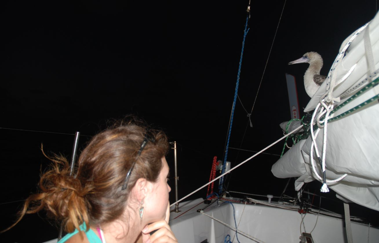 Nicole and bird © Ocean Research Project - photo by Matt Rutherford