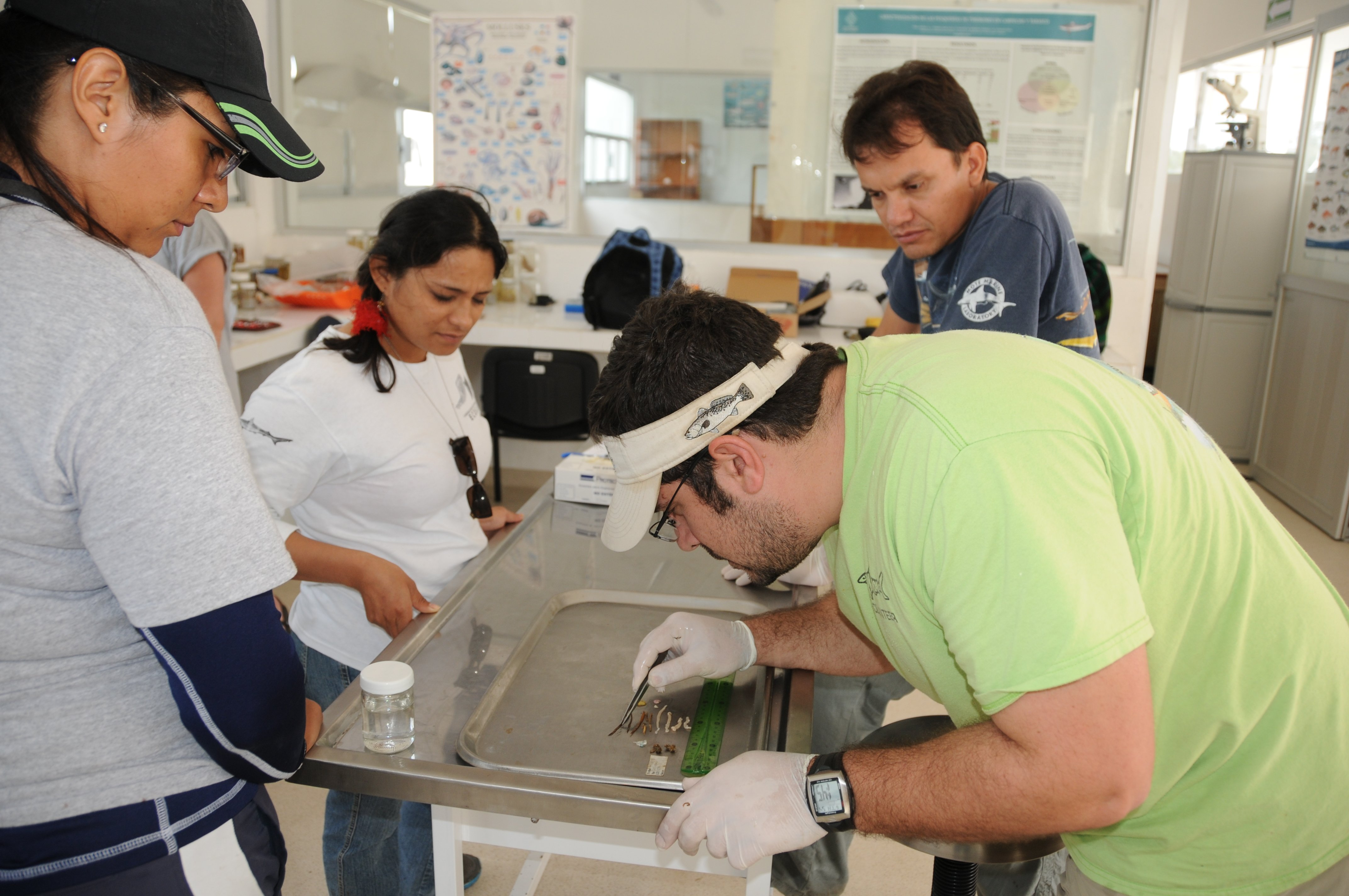 Matt Ajemian (Texas A&M Harte Research Institute) shows ECOSUR staff and students how to examine stomach contents from a spotted eagle ray in Campeche, Mexico. Photo credit: Kim Bassos-Hull – Mote Marine Lab