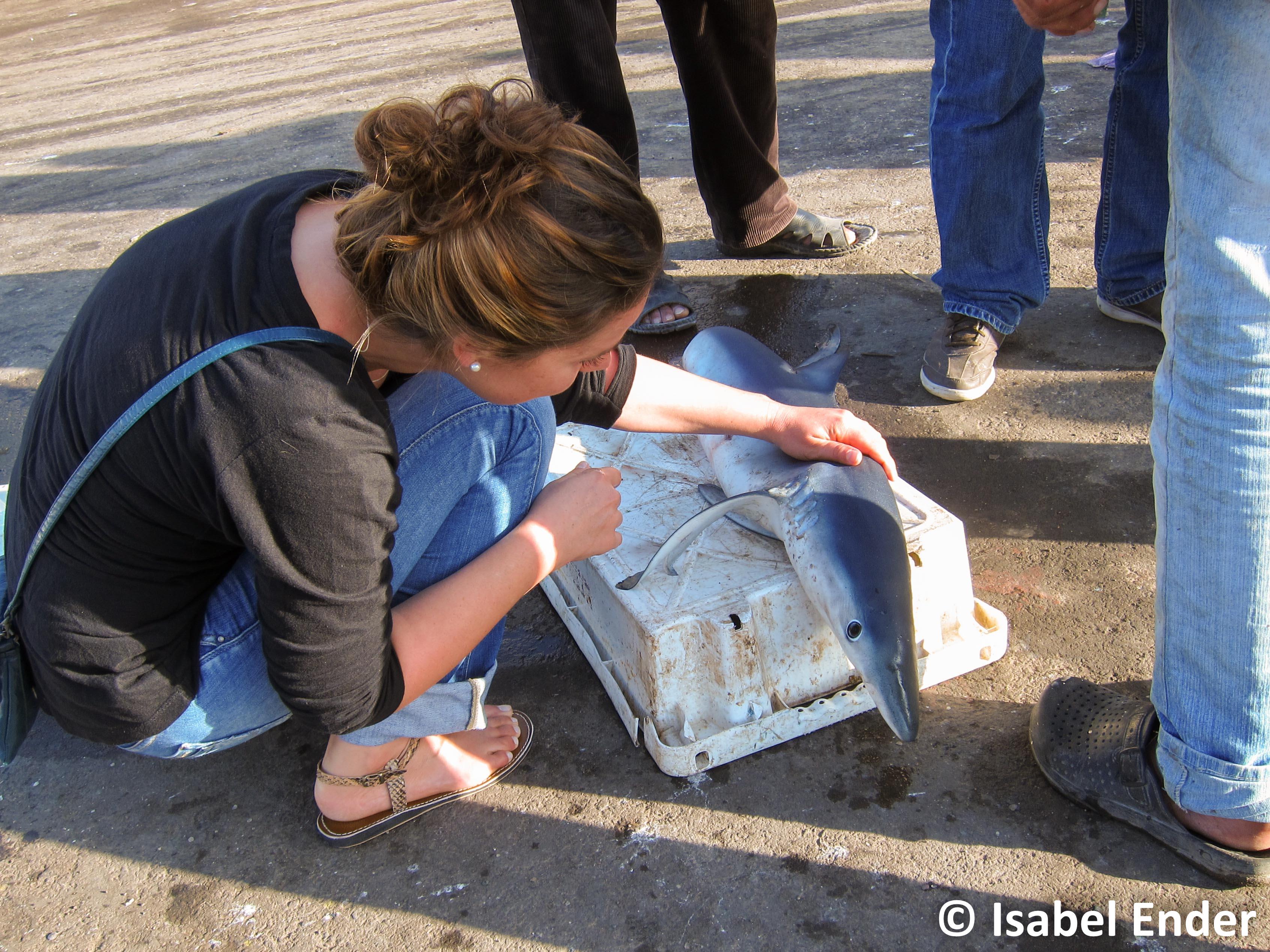 © Isabel Ender – inspecting a dead shark