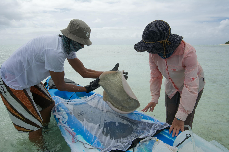 © Dr Rainer von Brandis | Save Our Seas Foundation