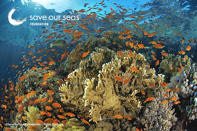 Ocean acidification can prevent healthy coral growth