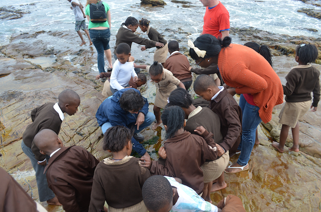 chilren exploring rockpools in cape town