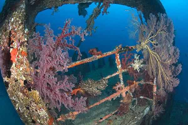 Fiji Wreck © Save Our Seas Foundation/Peter Verhoog