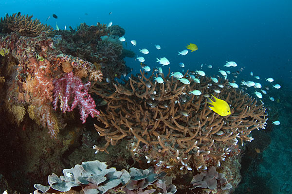 Fiji Reef © Save Our Seas Foundation/Peter Verhoog