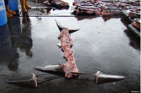 shark carcass loophole