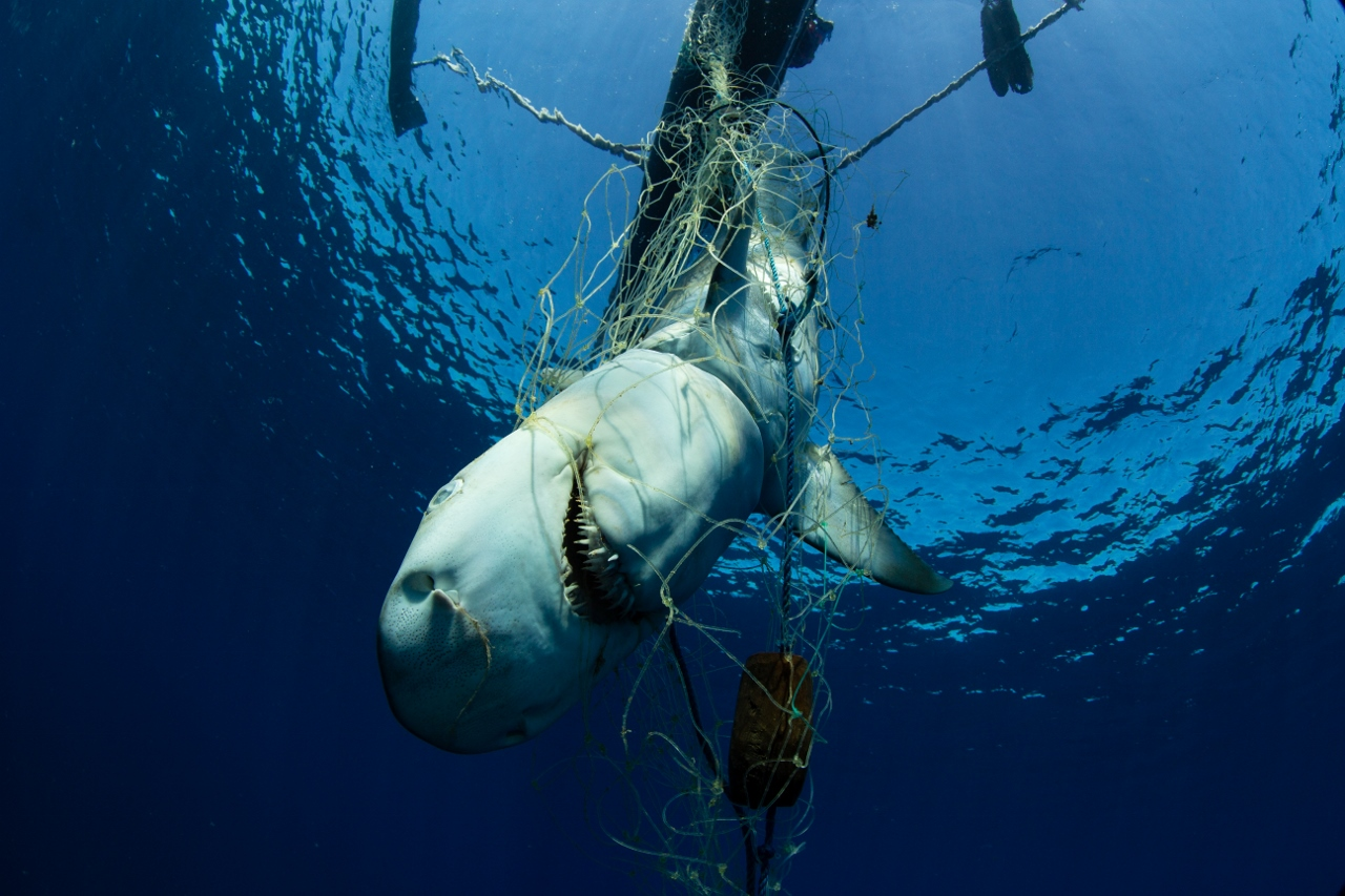 A shark is about to be pulled into a traditional pirogue at Nosy Dondosy, Barren Isles. Photo © Garth Cripps