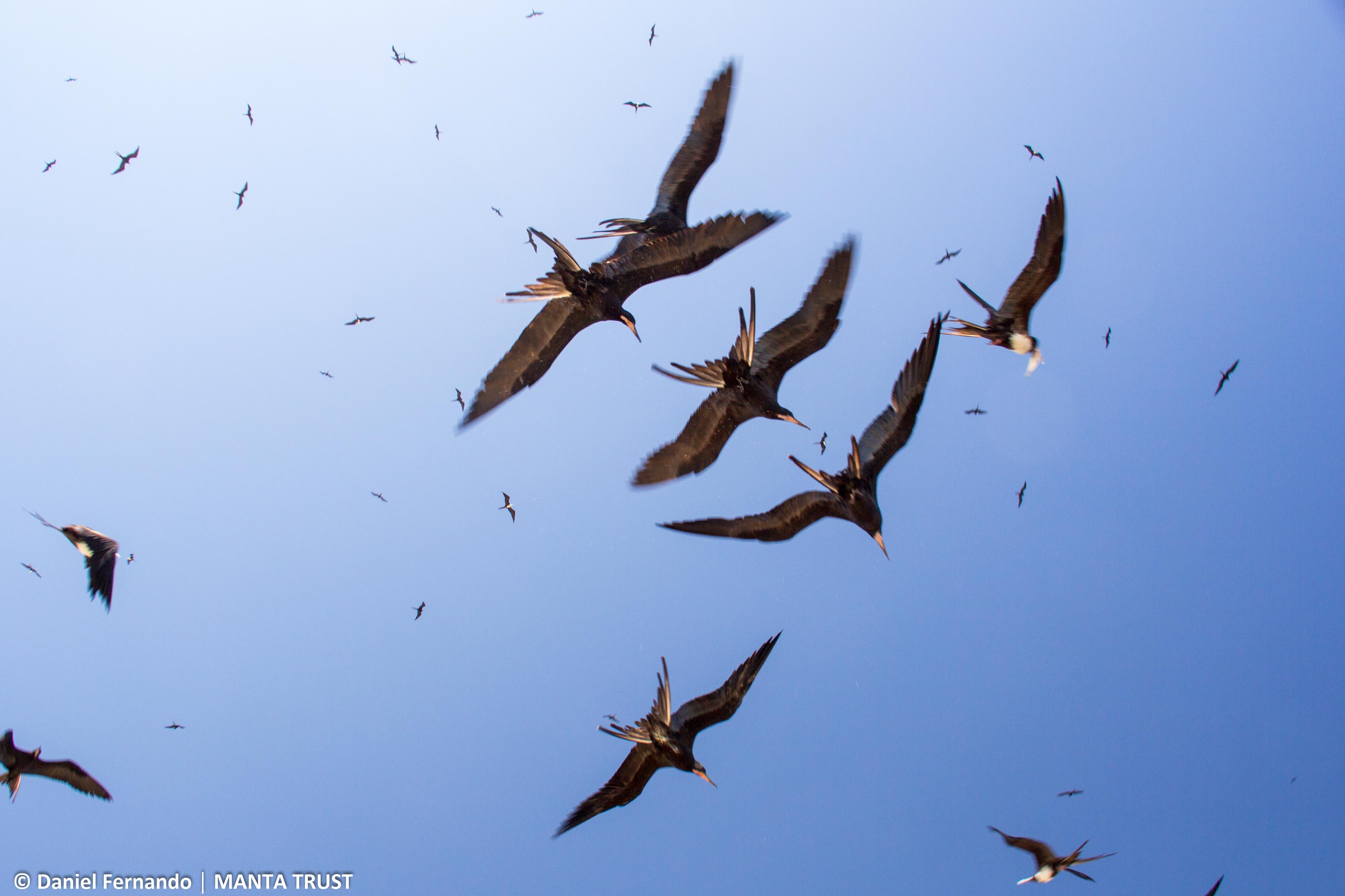 © Daniel Fernando – opportunistic birds at the fish market