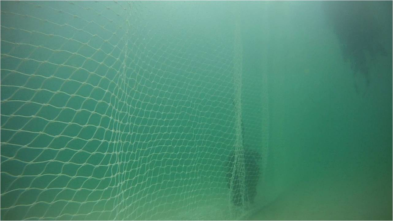 The net forms a physical barrier between the seafloor and surface and the small mesh size (4.5 x 4.5 cm) significantly reduces the likelihood of entanglements with any marine animals. Removing the net at night time reduces the risk even further. Credit Shark Spotters