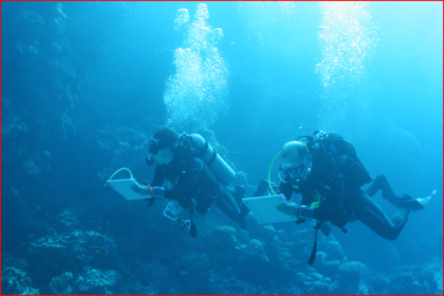 Expedition divers on-site at a Red Sea reef