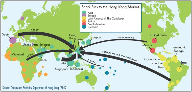 Shark fin exporters