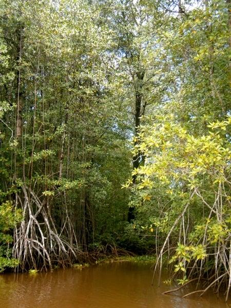 © Fundación Talking Oceans - Terraba Sierpe mangrove system, Costa Rica