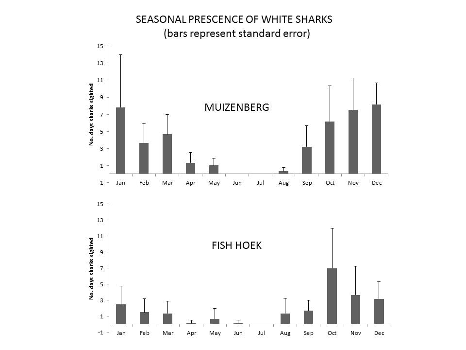 Seasonal prescence of white sharks at Muizenberg and Fish Hoek beaches.